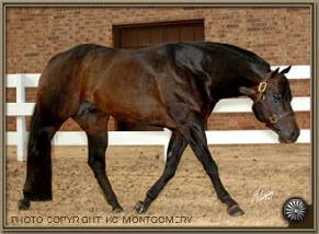Mansur performance horses invitation only stopboris Choice Image